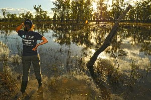 IFAW staff survey the flooding in Queensland, Australia.