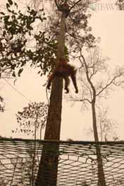 Tree_climber