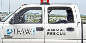 The International Fund for Animal Welfare deploys to New York state to help in relief efforts after Hurricane Irene.