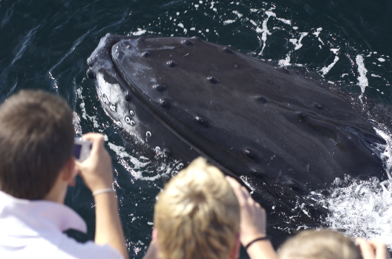 Whale_watching_2