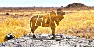 N'en restera-t-il que des mots ? Une étude récente des populations de lions montre qu'ils pourraient bien subir le même sort que les tigres sauvages.