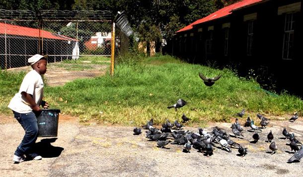 Kganya's liefde voor dieren gaat verder dan ''s mans beste vriend' en je ziet hem vaak de duiven op de binnenplaats van CLAW voeren.