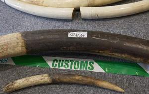 Wederom grote partij ivoor onderschept