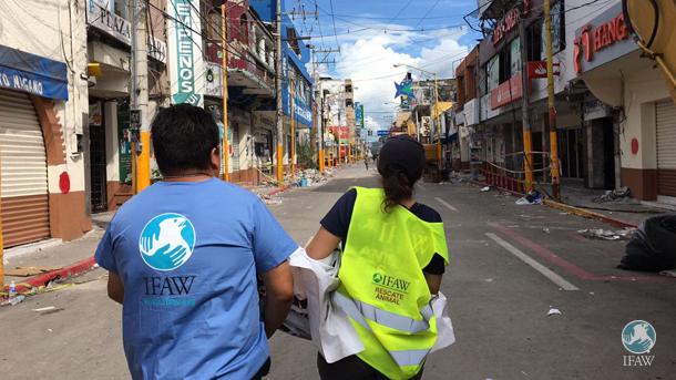 IFAW-noodhulp: aardbeving Mexico