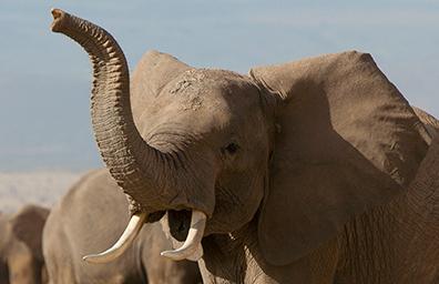 Matt Sorum drums up musicians' support for U.S. ivory ban