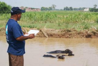 Ein IFAW Mitarbeiter kontrolliert das Vieh in einem überfluteten Gebiet in Pakistan