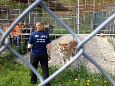 IFAW leads wildlife rescue in NY and finds new homes for lions, tigers, bears, w