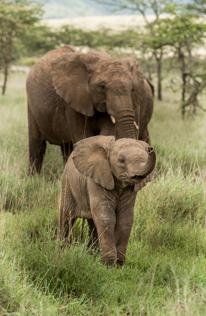 Help mee olifanten en andere dieren te redden