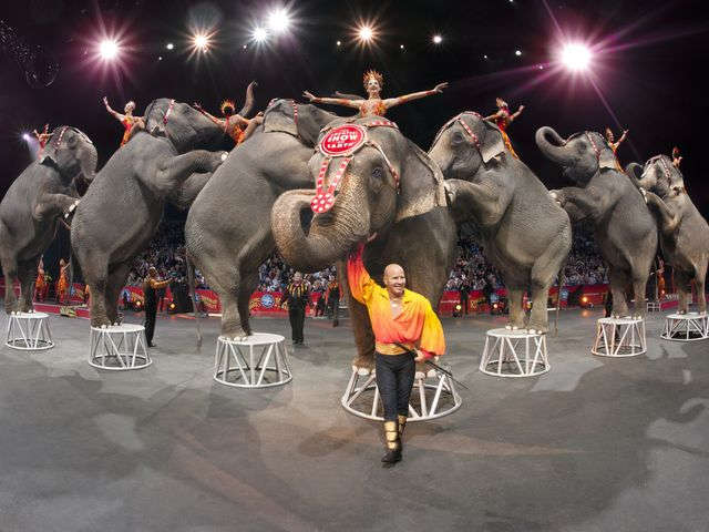 Ringling Bros. Circus commits to end elephant shows–are big cats next?