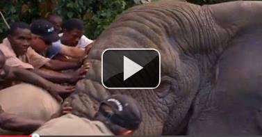 Revivez les moments forts de la mission éléphants en Côte d'Ivoire