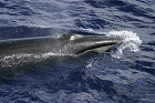 Japan Whaling – CITES Fails to Act on Imports