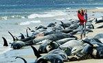 Biologen gaan ervan uit dat de dieren door het hoogfrequente geluid gedesoriënte