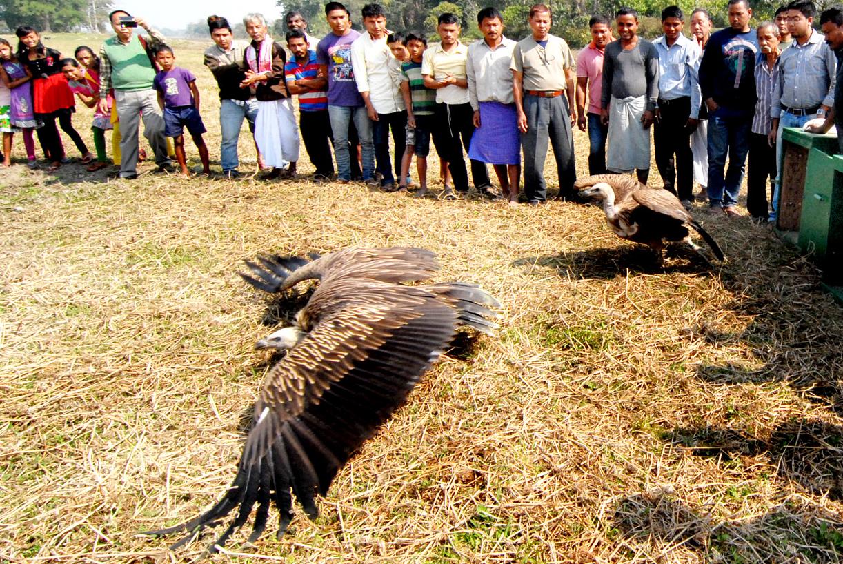 Vergiftigde gier ternauwernood aan de dood ontsnapt