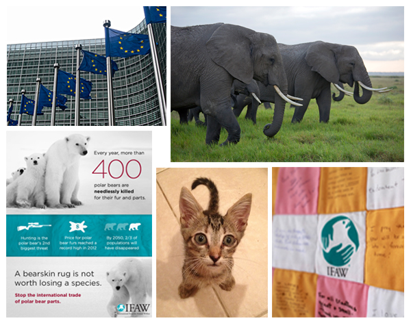 5 posts you may have missed, a weekly animal welfare briefing