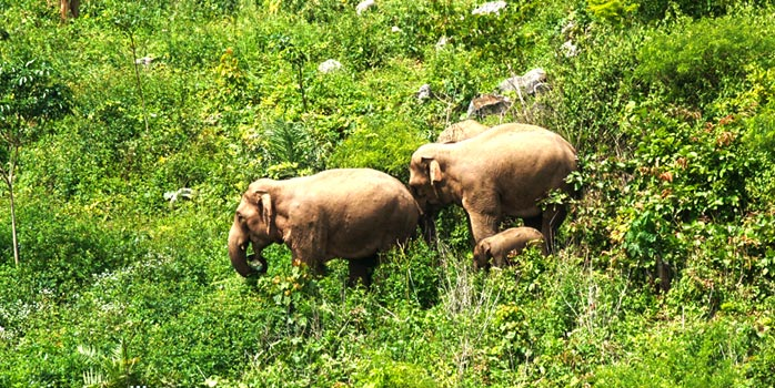 Pasgeboren Aziatisch olifantenkalfje ontdekt in China