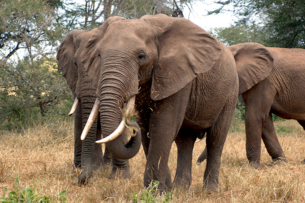 Massachusetts is about to get a lot friendlier for elephants and rhinos.