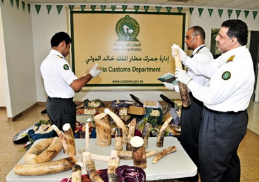 Saudi Arabia customs seized nearly 500 Kg of ivory at Riyadh in October of 2014.
