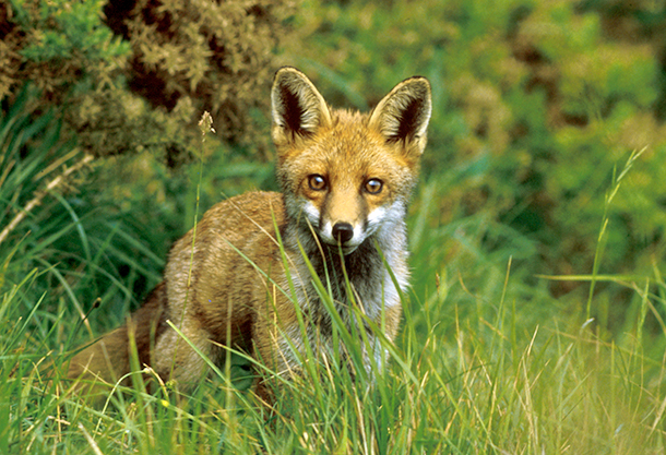 'Labour: Protecting Animals' is a party manifesto that seeks to protect and enforce the Hunting Act, and other animal welfare issues.