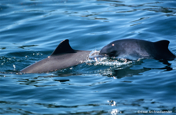 Harbour porpoises are common to all UK waters.