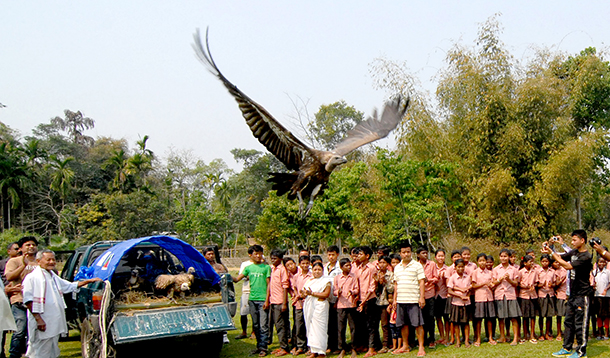 51 Vultures fell victims to poisoning and we could save just one.