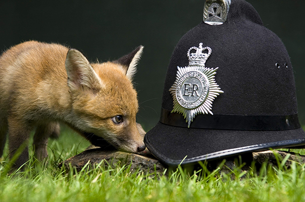 We are now calling for a number of necessary amendments of the Hunting Act to address this clear enforcement problem.