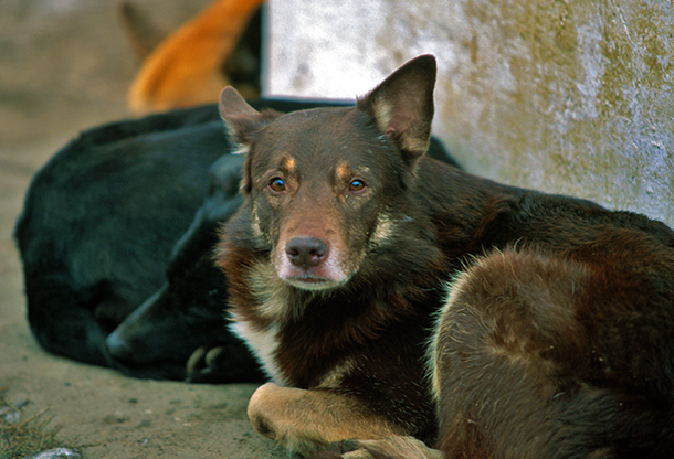 Culling dogs in Sochi—or any community, for that matter—is the wrong solution. c. IFAW