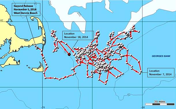 Le dauphin « IFAW14-149Dd » a été repéré nageant jusqu'à 160 kilomètres au large des côtes.