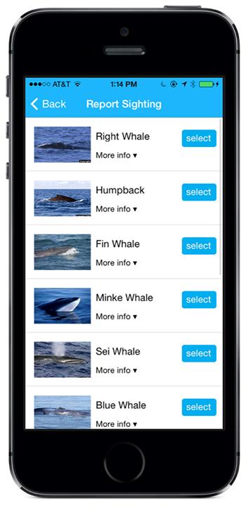 A screenshot of the Whale Alert App.
