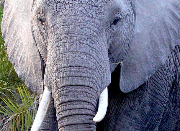 De schokkende omvang van de online-dierenhandel is een ernstige bedreiging voor het wild.
