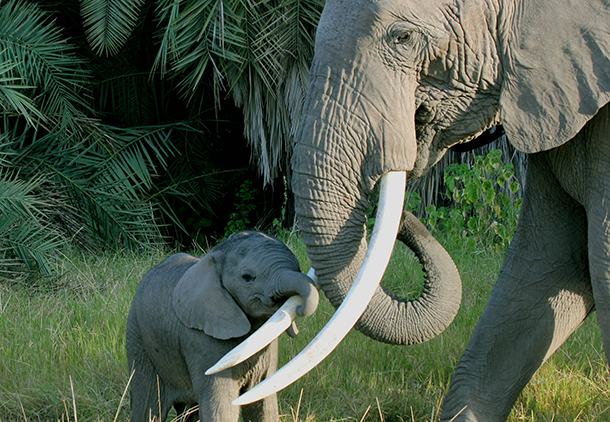 "Lovely Enid, the elephant who ""talks"" to me, is also a wonderful and caring mother to her son Ektor."