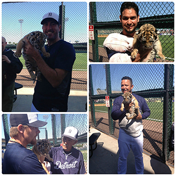 It's not every day that a baby Tiger comes to visit the real Tigers at Spring Training. – Source: Detroit Tigers Facebook Page