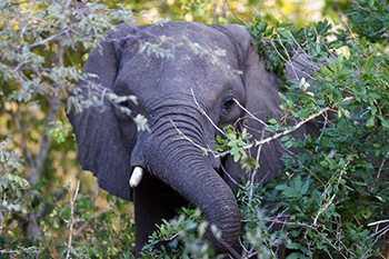 The African Elephant Coalition members are determined to achieve a better future for elephants.