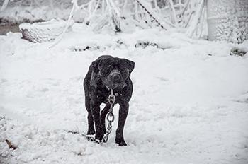 Photo courtesy of ASPCA.