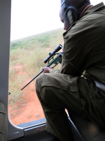 Dr Jeremiah Poghon, the KWS vet, aims and darts the elephant with the ease of the skilled marksman.
