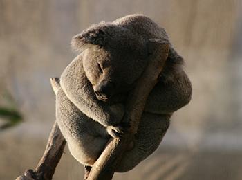 Take action for Australian wildlife now!