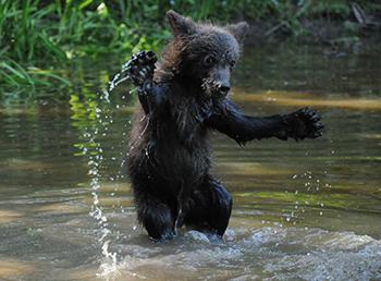 Borya spielt im Wasser