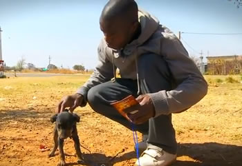 "An image from the IFAW short film called ""People of Dogs"", about the South African CLAW team. Click to watch."