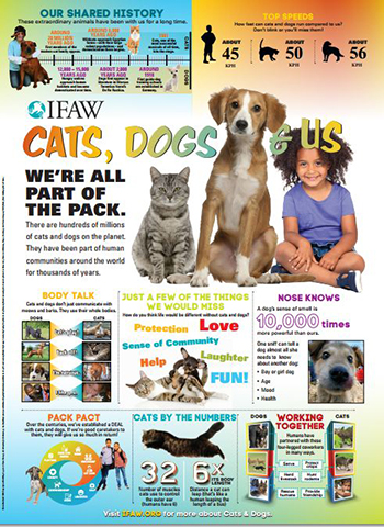 New Cats, Dogs and Us lesson plans have been created to meet the new national Australian curriculum outcomes.