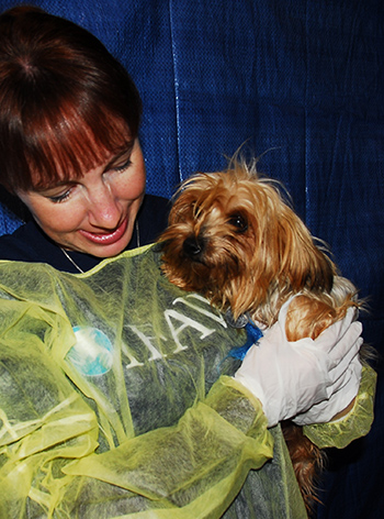 IFAW volunteer with #216 in the Arkansas emergency animal shelter. c. IFAW