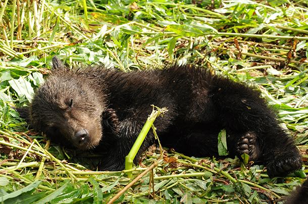 Zeit zum Schlafen! Völlig erschöpft nach einem ereignisreichen Tag!