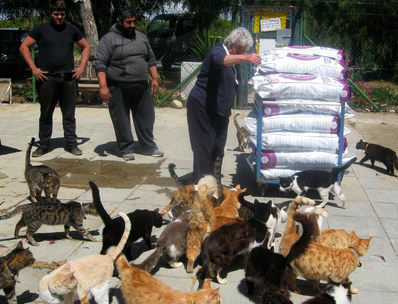 Cats at the Malcolm Cat Sanctuary are eager to be fed.