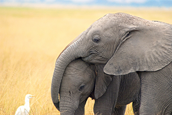 Together we will: stop the killing, stop wildlife trafficking and stop the demand. © IFAW/A. Dinkelmeyer