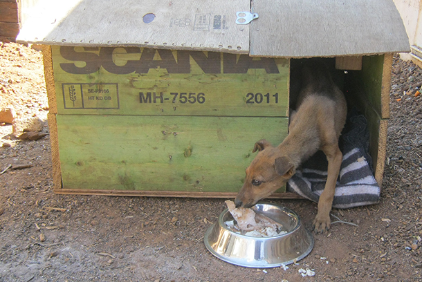 Today, Danger has food and shelter after Buthelezi's intervention.