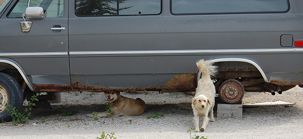 Can you tell whether these dogs are strays or locally owned? Knowing the difference helps local dog management efforts.