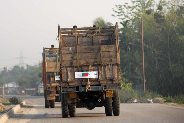 De trucks brengen de olifanten naar Manas
