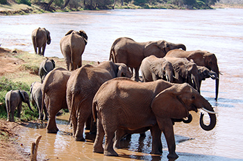 Elephants - too few or too many? Martin Meredith has a clear answer.