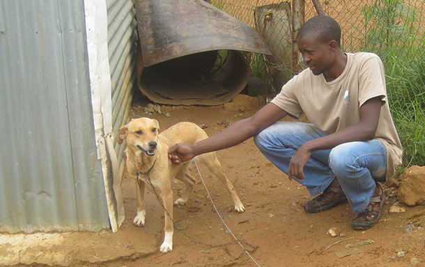 Fistos is now a happy dog, thanks to Themba Buthelezi, a CLAW rescuer, who built a wire fence and provided a kennel. The dog's owner – a sick, elderly woman—needed help in caring for her dog. Buthelezi still checks on Fistos regularly.