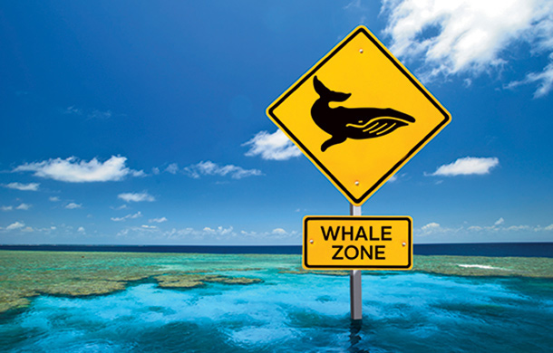 IFAW recommends the introduction of 'whale zones', restricting vessel speeds through core humpback whale habitat within the GBF.