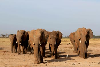 "Part of the GB family in their ""make-up"" - Garissa, Gabby, Galileo and Galana wear red mud, showing they've been spending time to the South-East of the Park."