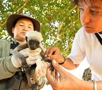 Five families of Eastern hoolock gibbons were successfully translocated by an IFAW/WTI team from the village of Dello to the Mehao Wildlife Sanctuary in Roing, Arunachal Pradesh, India. © IFAW-WTI/S. Barbaruah